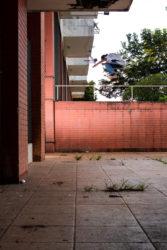 Elias Batista: Ss Ollie - Foto: Felipe Fernandeskt